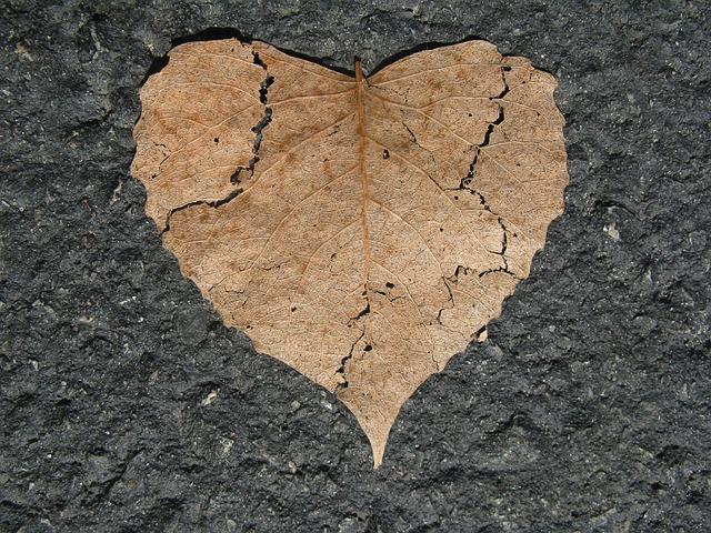 heartbreak-leaf-742712_640