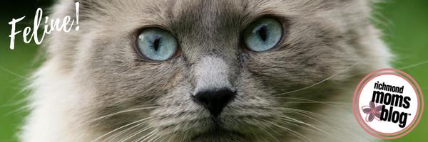 What Pet Should I Get - Richmond Moms Blog - Feline Cat