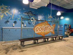 Goldfish Different